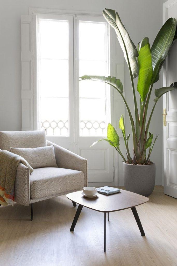 як обрати кімнатні рослини