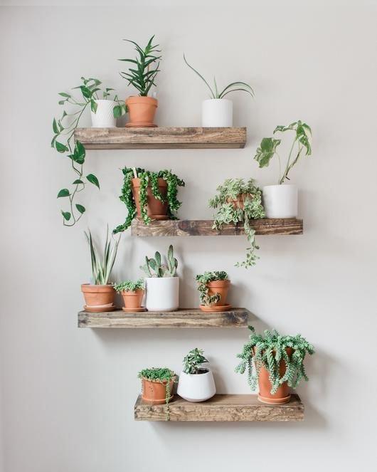 Simple Home Store - Кімнатні рослини в інтер'єрі: як вибрати квіти та горщики